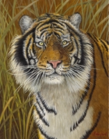 Tiger Oil painting By Stephen Powell