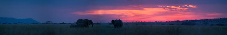 Elephant Sunset. African Safari 2012- Tanzania, Photograph by Stephen Powell wildlife Artist and Photographer