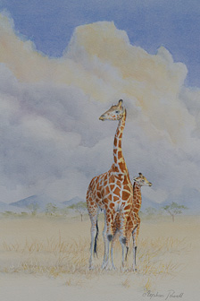 Giraffe - Water colour Stephen Powell Wildlife Artist