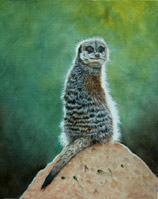 Oil painting of Meerkat Oil painting By Stephen Powell