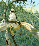 Laughing Kookaburra Oil painting By Stephen Powell