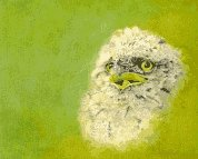 Tawny Frogmouth Oil painting by Stephen Powell