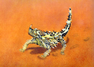 Thorny Devil Oil painting By Stephen Powell