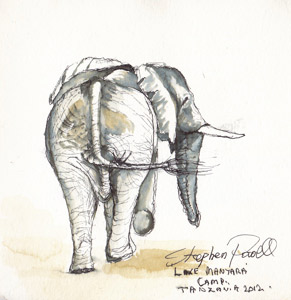 Elephant - Lake Manyara TanzaniaPen and watercolour wash by Stephen Powell Wildlife Artist
