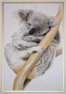 Koala by Cylene Whiteley