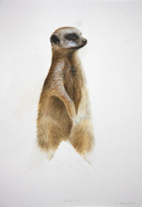 Meerkat by Linda Mowbray