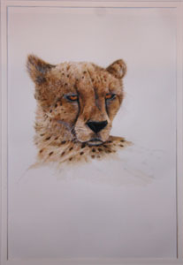 Cheetah by Robyne Berling