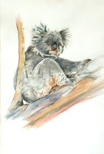Koala by Denise Illing