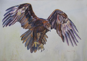 Wedge-tailed Eagle by Denise Illing