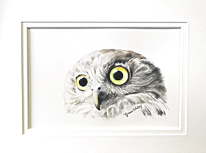Barking Owl by Grace Whitby. Watercolour. Workshop participant of Stephen Powell Wildlife Artist at Grafton Artsfest