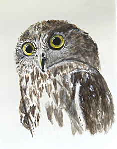 Barking Owl by Lesley Anne Jacobson. Workshop participant of Stephen Powell Wildlife Artist at Grafton Artsfest