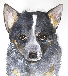 Australian cattle dog by Lesley Anne Jacobson Workshop participant of Stephen Powell Wildlife Artist at Grafton Artsfest