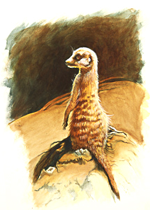Meerkat by Julianne Gosper. Workshop participant of Stephen Powell Wildlife Artist at Grafton Artsfest
