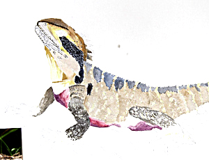 Warter Dragon. Workshop participant of Stephen Powell Wildlife Artist at Grafton Artsfest