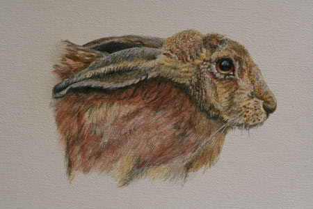 Hare by Joan Lewis
