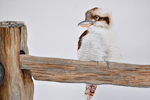 Kookaburra Watercolour by Melanie Thorn