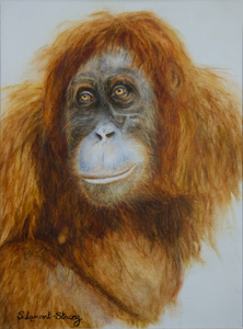 Orangutan by Sheila Lamont-Stacey. Stephen Powell Australian Wildlife Artist's students paintings