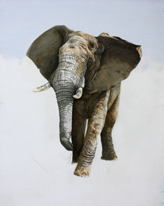 African Elephant work in progress. Oil painting by Stephen Powell. Reference gathered whilst participating in Siyafunda Volunteers on Makalali Game Reserve South Africa