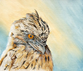 Frogmouth Oil painting