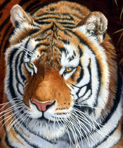 Bengal Tiger oil painting. Final close up by Stephen Powell